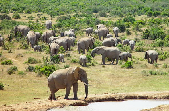 View of elephants in Addo National Park.