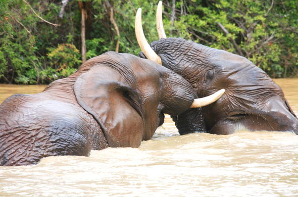 Addo Elephant Park elephants in river.