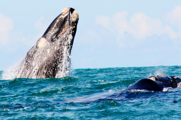 Enjoy unforgettable whale sightings in Agulhas National Park.