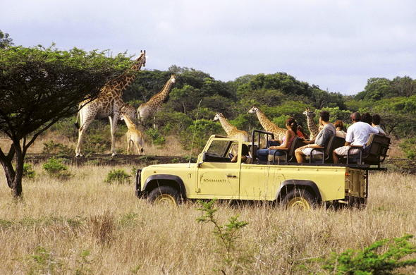 Explore Bonamanzi Game Reserve on game drives.