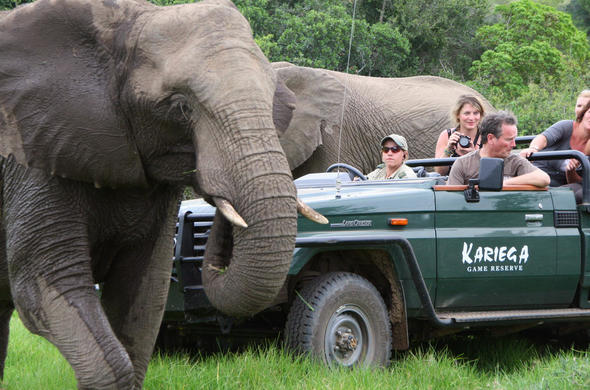 Elephant sighting on a game drive in Kariega Game Reserve.