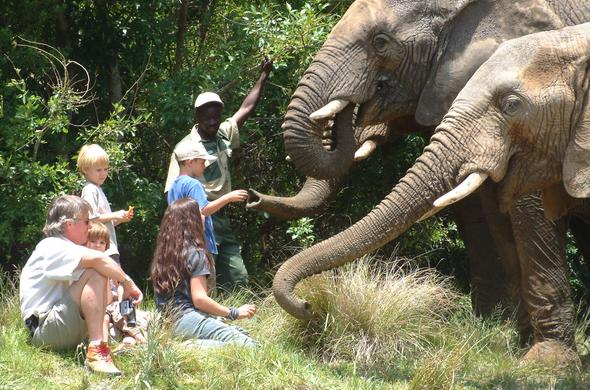 Elephant National Park guests interacting with elephants.