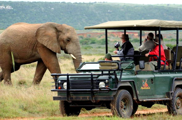 Malaria free safari along the Garden Route.
