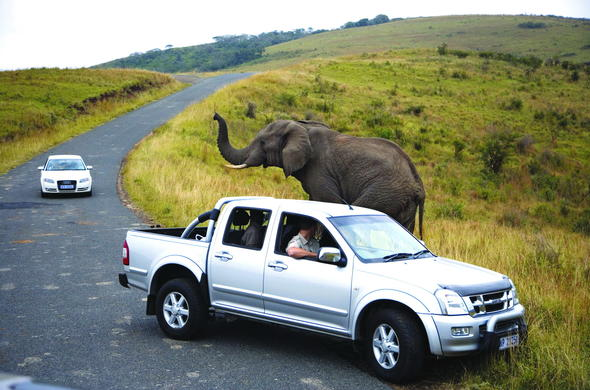 See elephant in Hluhluwe Game Reserve on a self-drive holiday.