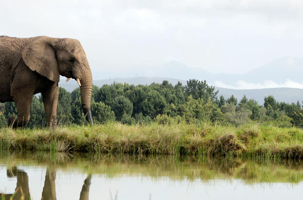 Knysna Elephant Park is a top Garden Route attraction.