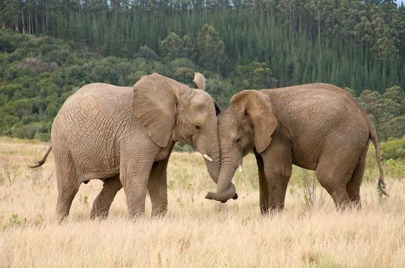 Images Of Knysna Elephant Park South Africa Nature Reserves
