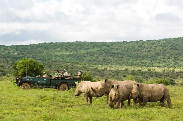 Rhino sighting during an open safari vehicle game drive in Kwandwe Private Game Reserve.