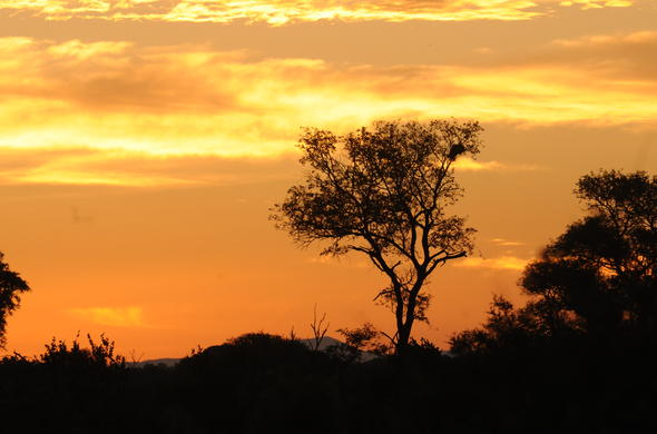 Kruger National Park sunset in the Lowveld.
