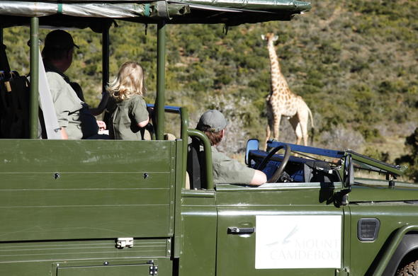 Giraffe sighting in Mount Camdeboo Private Game Reserve.