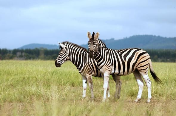 See a variety of free roaming wildlife in the Nambiti Game Reserve.