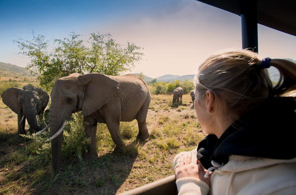 Exciting elephant sighting during a game drive in Pilanesberg National Park.