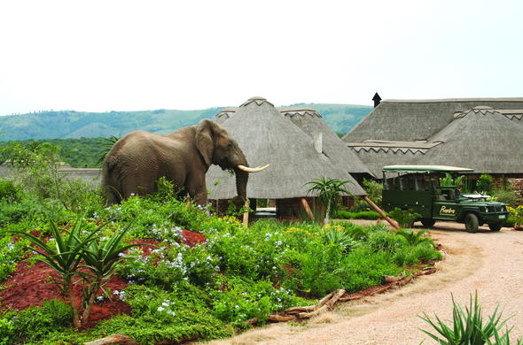 Elephant on the premises of Pumba Private Game Reserve & Spa.