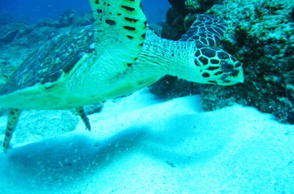 See Turtles in Sodwana Bay National Park.