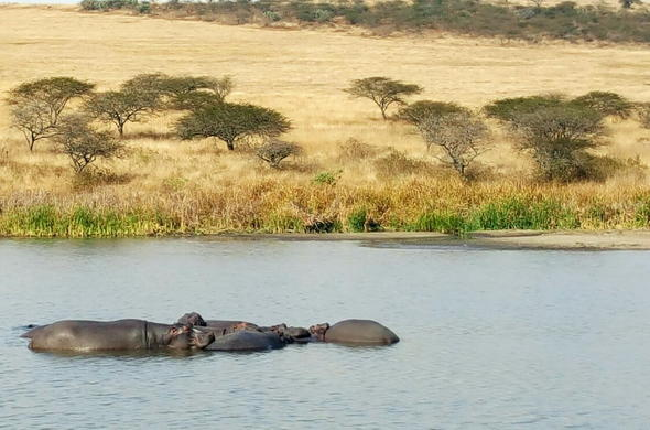 Enjoy incredible hippo sightings at Tala Game Reserve.