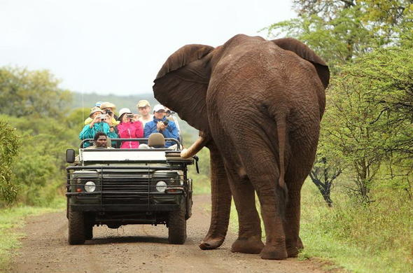 Big Five safari game drive in Thanda Safari Private Game Reserve.