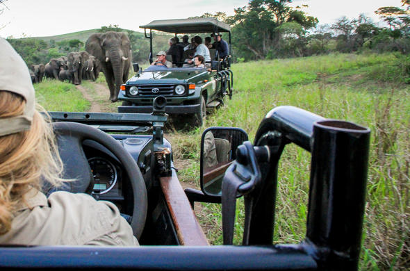 Game drive in open safari vehicle at Thula Private Game Reserve.